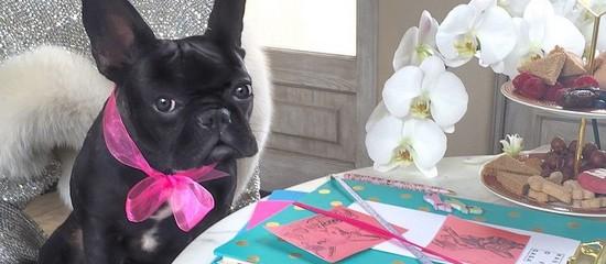 Lady Gaga va lancer une ligne de vêtements pour chien !